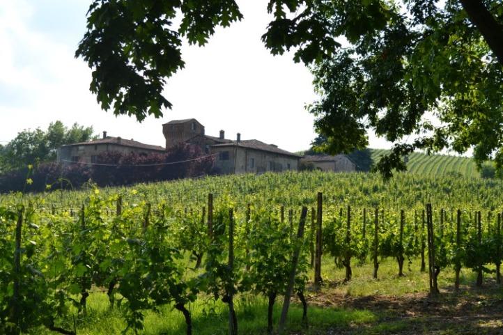 Azienda vitivinicola Pusterla