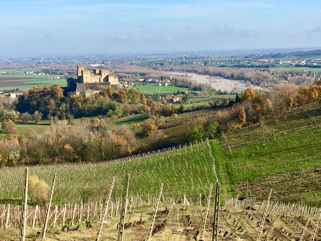 Vineyards and view of Torrechiara Castle
