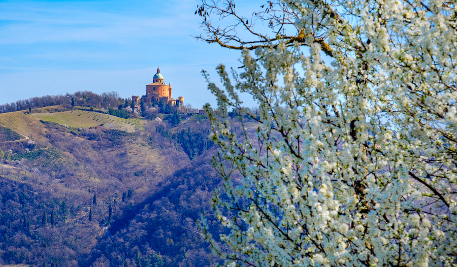 View over San Luca in Bologna with tree in bloom